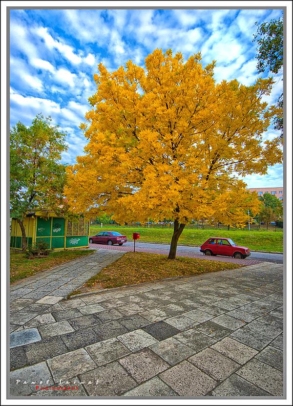 Zolte_drzewo_2014